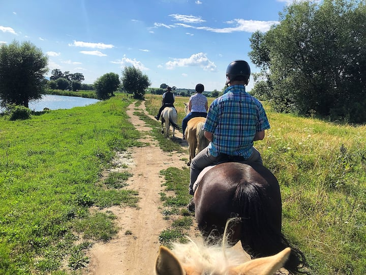 Beginners horseback riding trail!