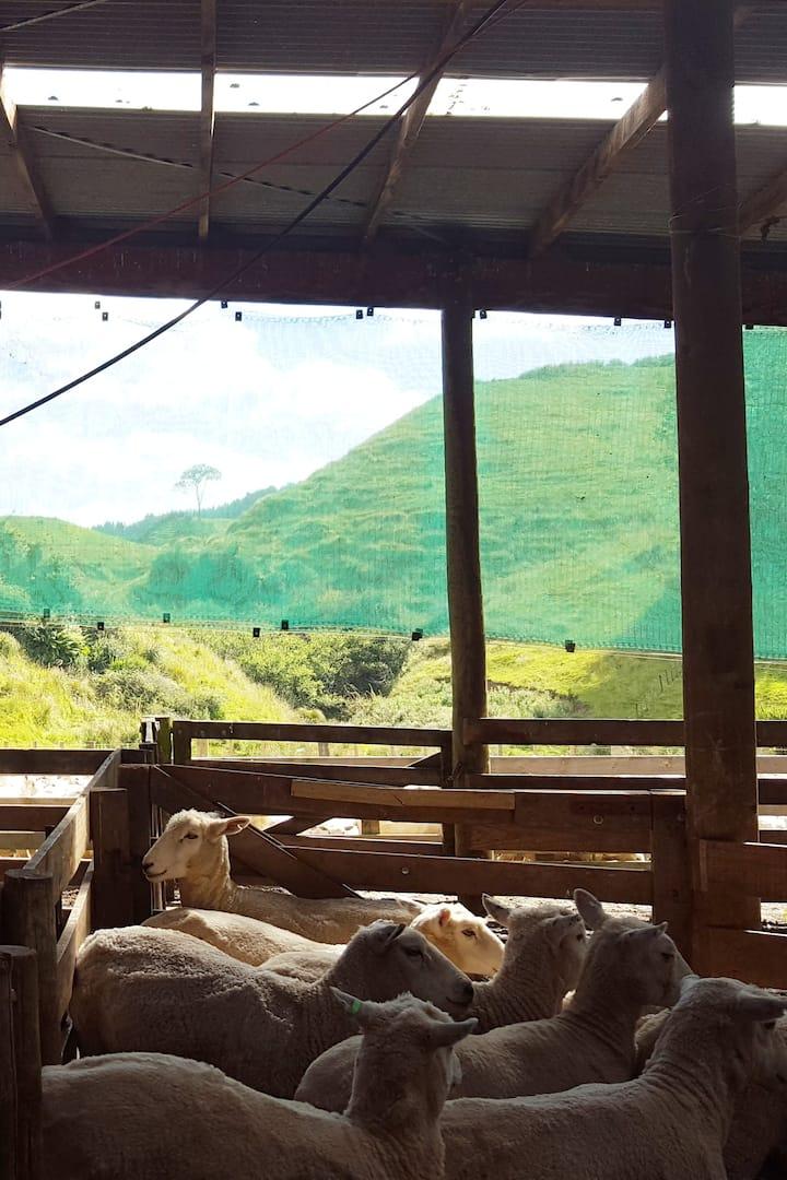 Sheep Yards