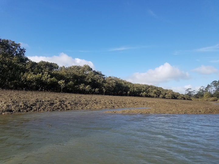 Mangroves with migrating birds