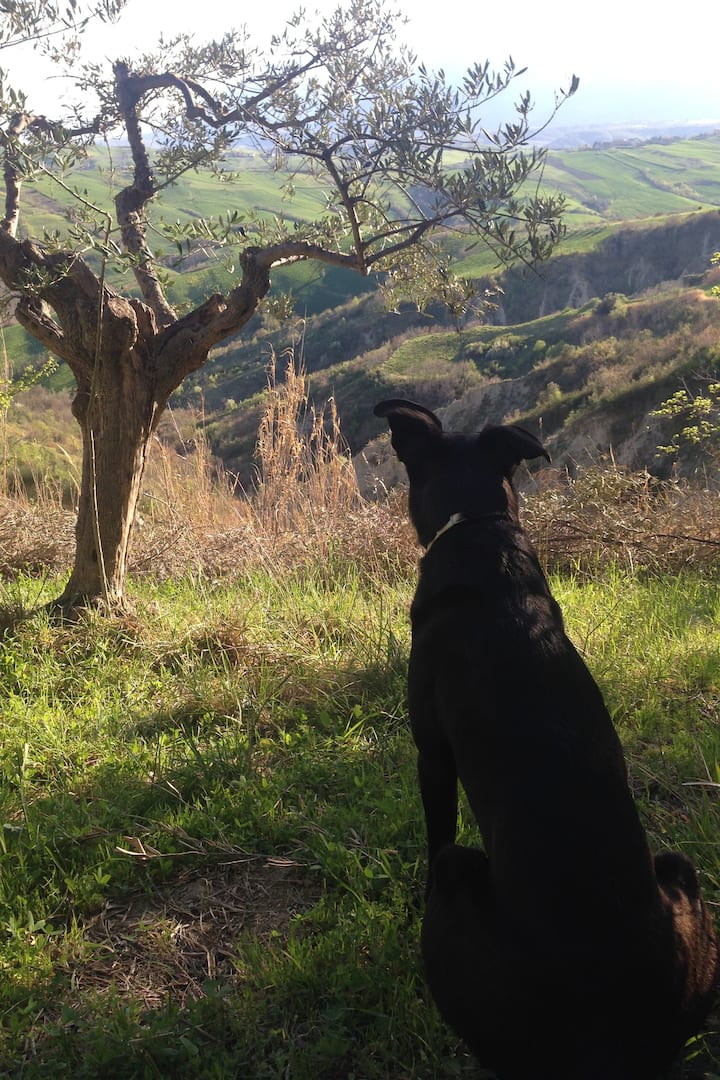 Our dog Moos overlooks the calanchi