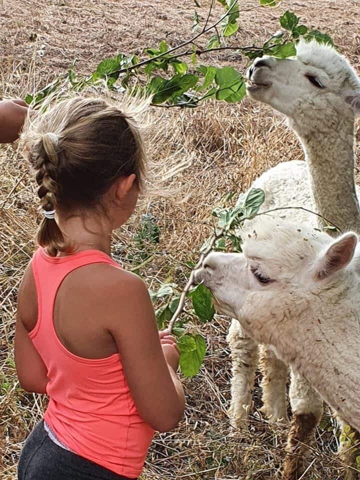 Children interact with big animals