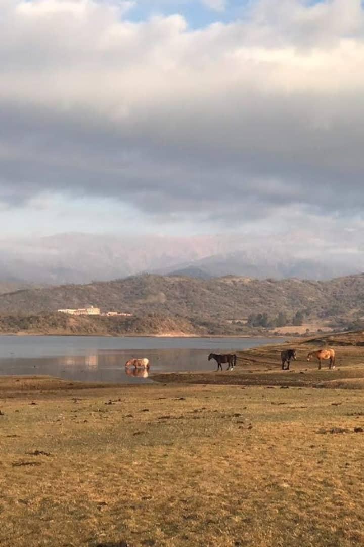 Caballos disfrutando el dique