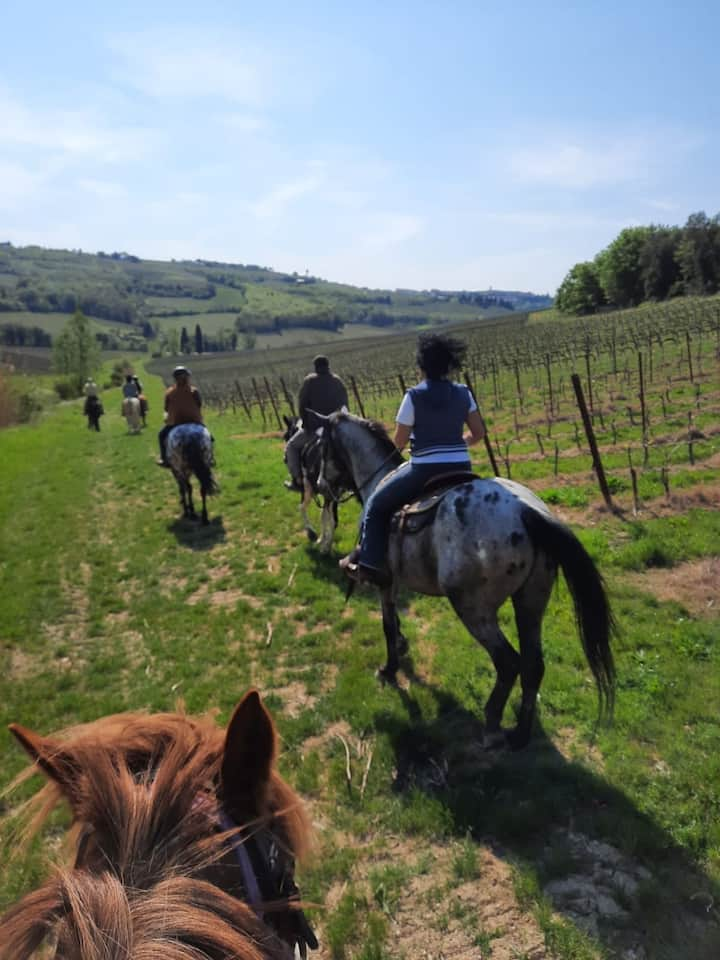 Passeggiata fra le vigne
