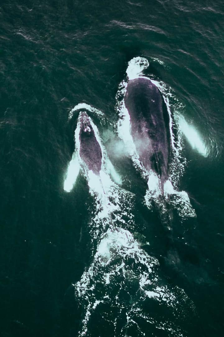 Humpback mom and her baby