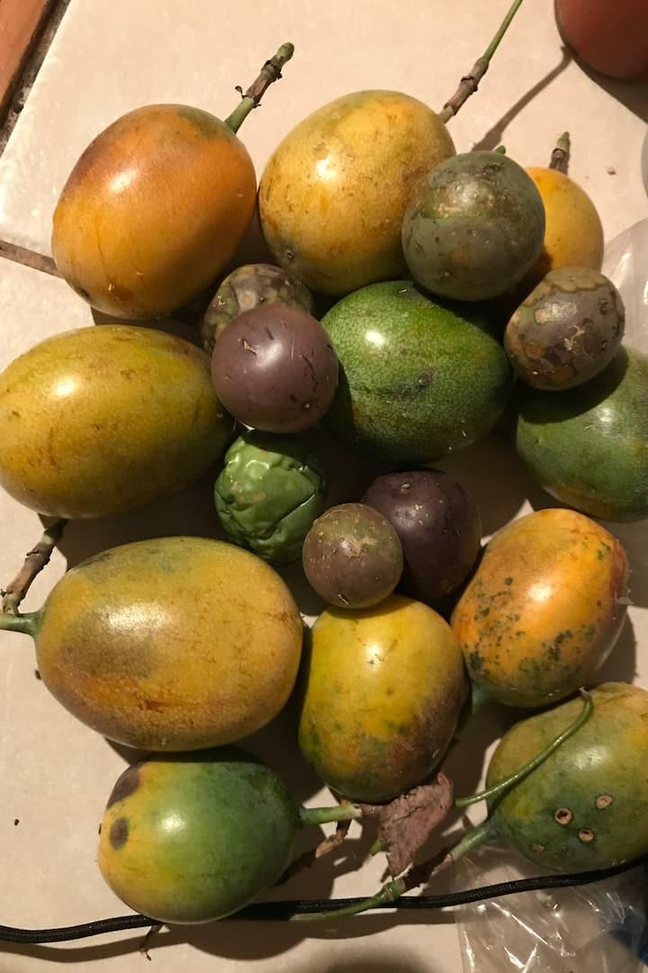 wild liliqoui (passion fruit) harvest