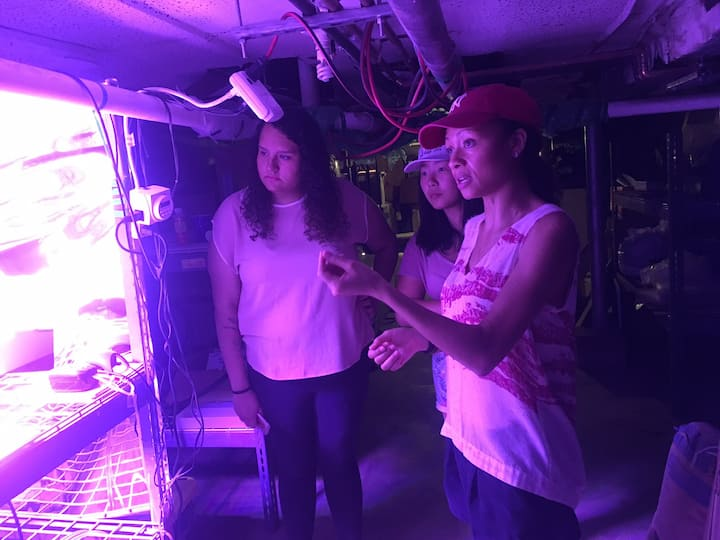 Basement Aquaponic & hydroponic systems