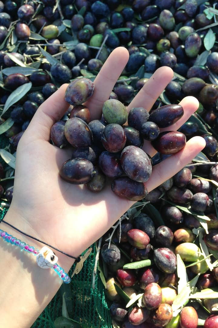 Olives ready for use