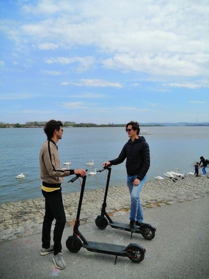 Zemun Riverwalk and Swans