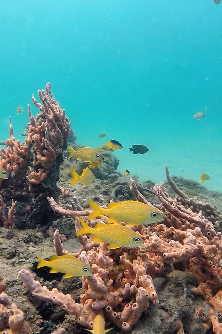 Reef fish, sponge and coral