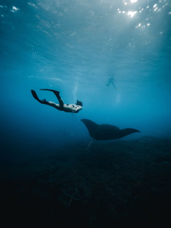 See Giant Manta  Rays if we get luck!
