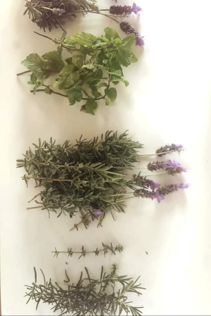 freshly picked herbs from the garden