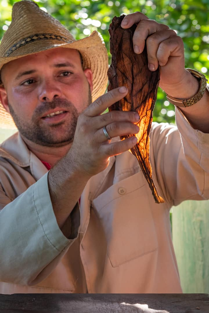 Learn how cuban cigars are rolled