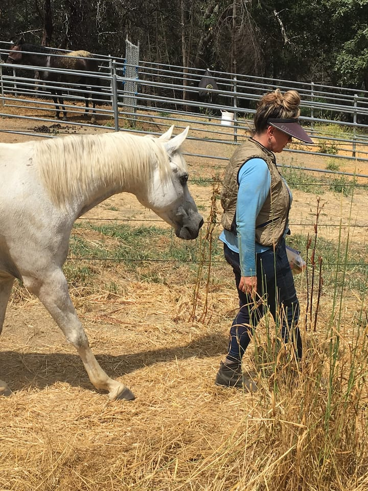 Finn guest from Sunrise Horse Rescue