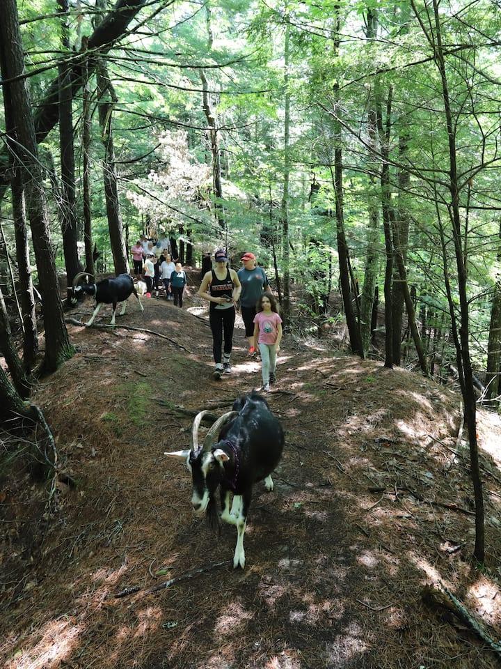 Hiking the Ten Apple ridge