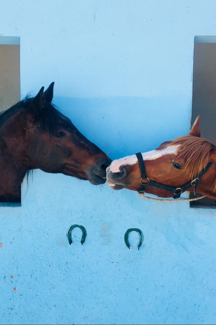 happy and well groomed horses