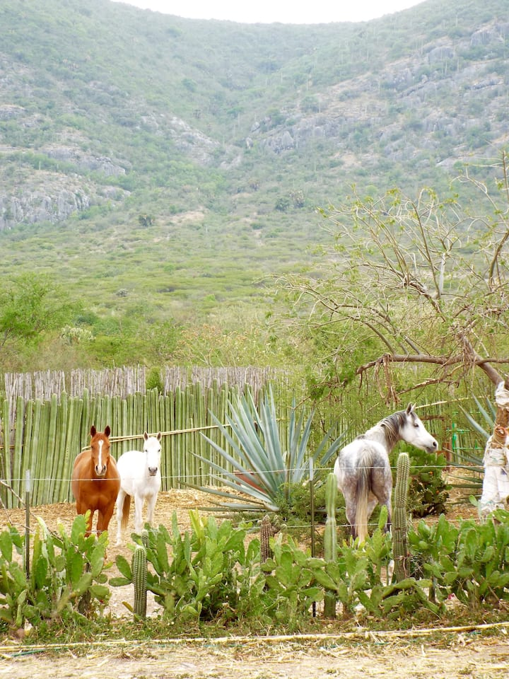The horses and exotic flora at the ranch