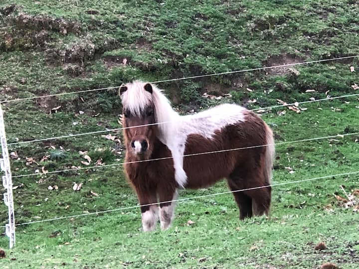 Hi, Im Marley the mini horse!