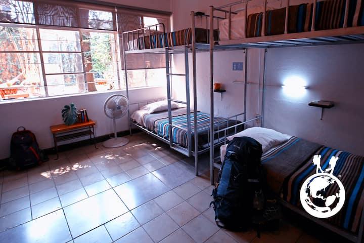 Cozy 8-bed mixed dorm in Chapultepec Ave. Area