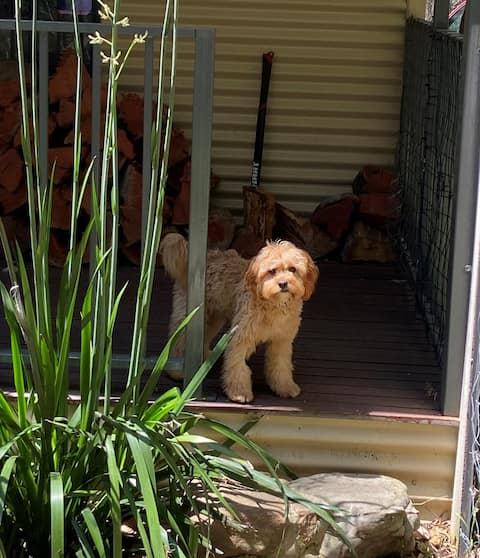 Dog friendly cottage suitable for 2 adults