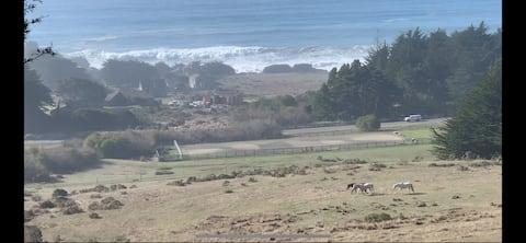 SeaHorse Retreat: ocean views, tall trees, privacy