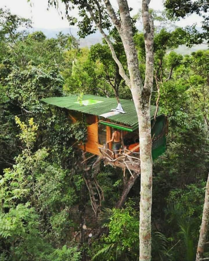 Kura Kura Treehouse - Mariri Jungle Lodge