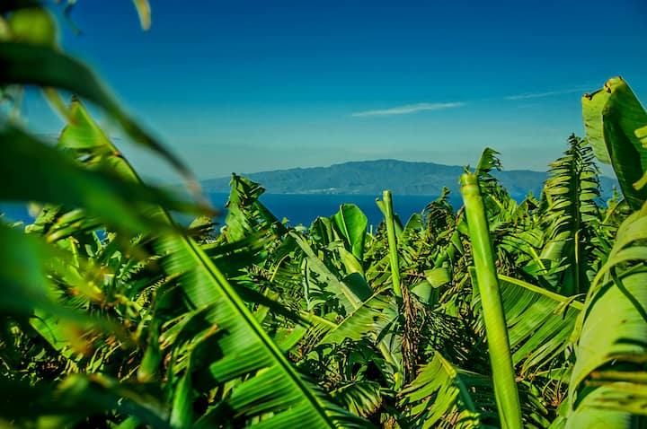 Tenerife Sur Costa Adeje, casa jardín y frutales 4