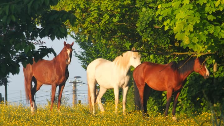 Les chevaux du vent