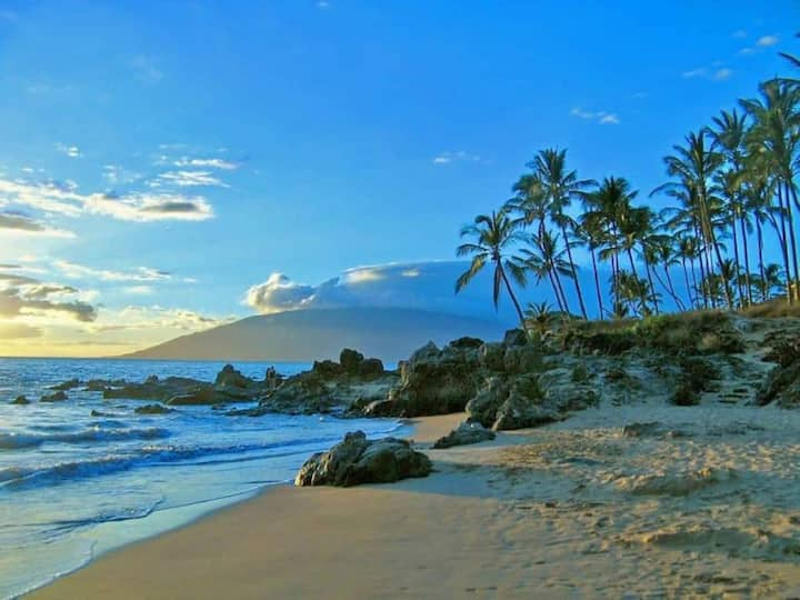 Here Today  Gone To Maui!