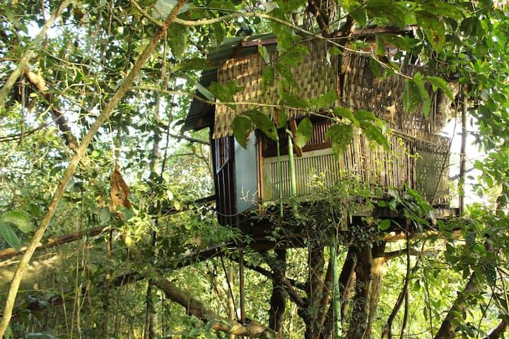 Casa da árvore, ecológica e com vista para o mar!