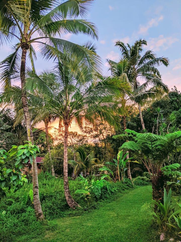 Tropical Garden Studio!