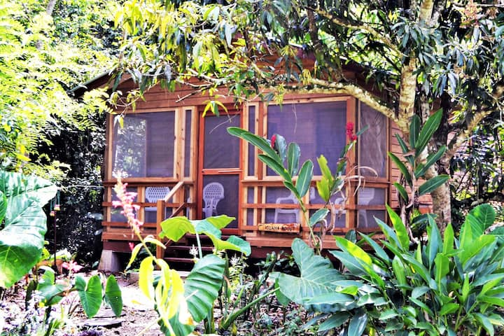 Iguana Roost Equipped Maya Home In Tropical Garden