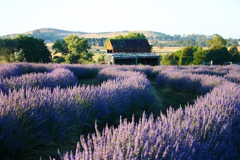 The Lavender Patch