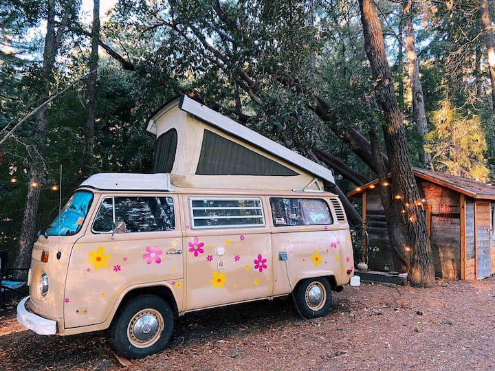 Hippy VW Westy in Redwoods