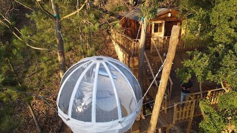 Wood Valley Cocoon