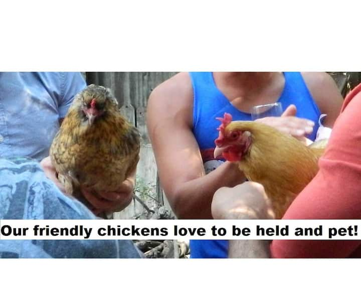 Orchard View Home ~ Eggs, Produce, & Pet Sitting!