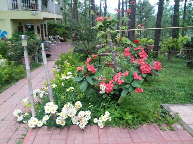 Flores y Terraza