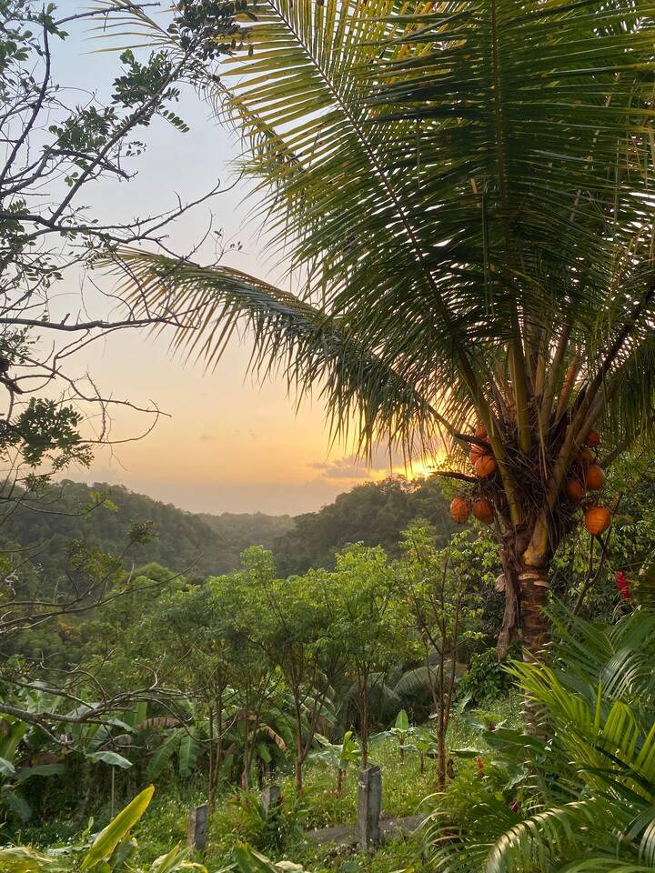 Confort, détente&jardin tropical - 6km de la plage