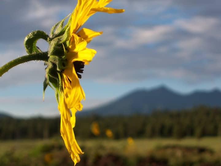 Arboretum at Flagstaff Teardrop Camper Getaway