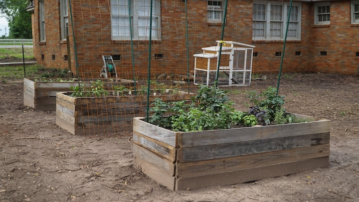 it's so suite sweet urban garden with chickens