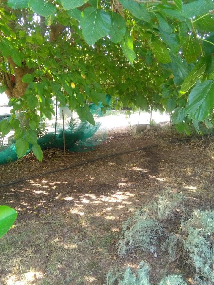 Offro tre posti tenda nel mio giardino