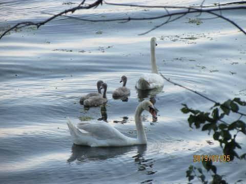 Hiawatha Bay—Dog Lake (Historic Rideau Canal)