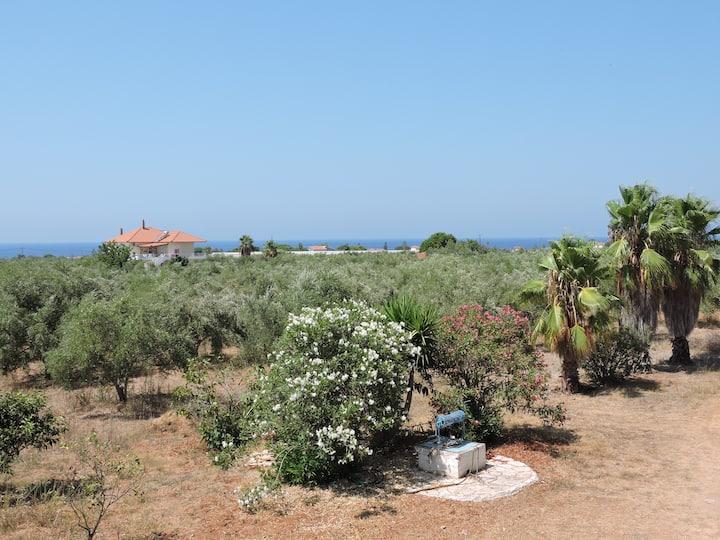 Agrilis Olive grove