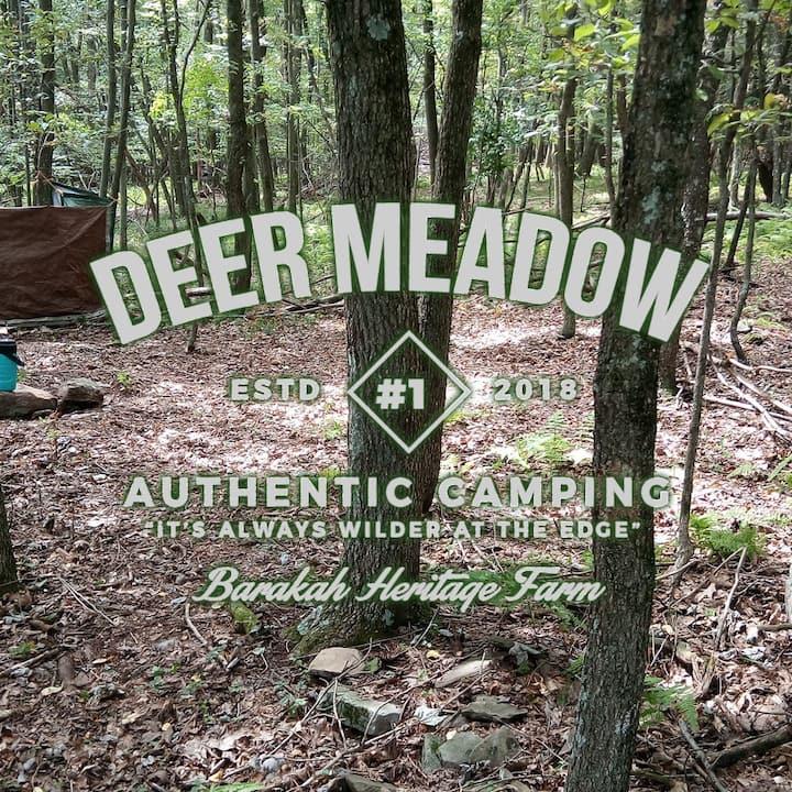 Barakah Farm's Deer Meadow private woodland camp