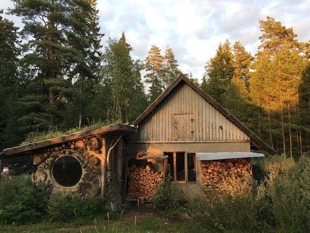 Tiny home in magical forest.