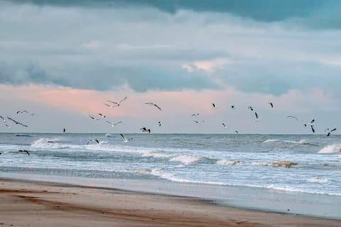 Sol Playa y descanso