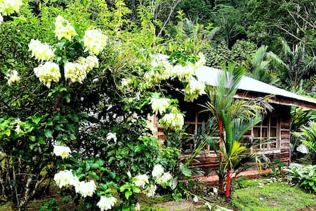 Rain Forest Dream: Heliconia Cabin