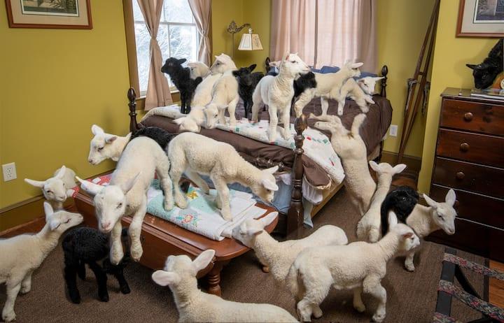 Green room on a working sheep farm