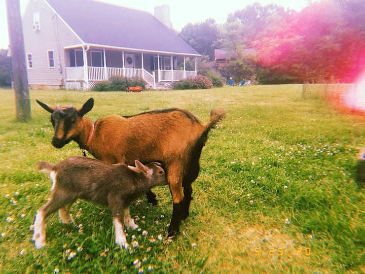 Cozy Goat Farm with Fast WiFi by High Bridge Trail