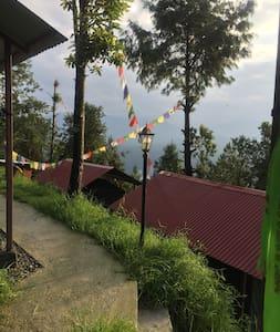 Backyard of tents