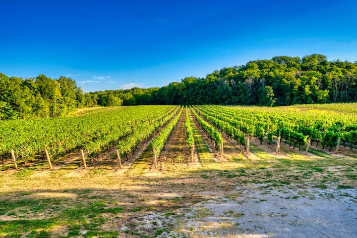 Vineyard House Niagara's Wine Country